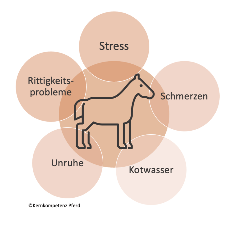 Stress beim Pferd Training