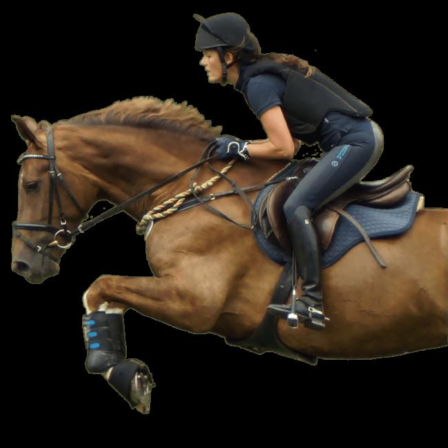 pferd-freigestellt-gross